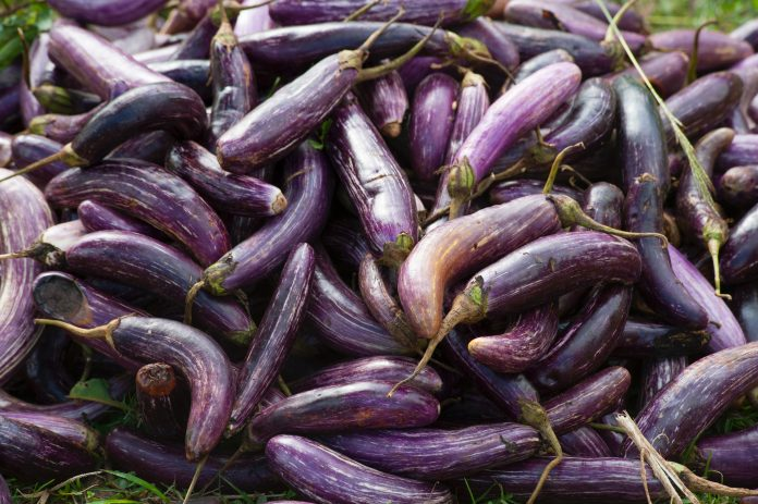 Agriculture Aubergine Close Up 321551